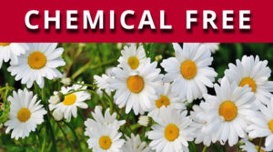Elexoma is chemical free